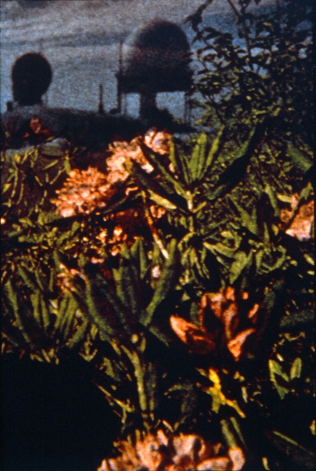Oliver Wasow, Domes and Flowers 1989, Cibachrome